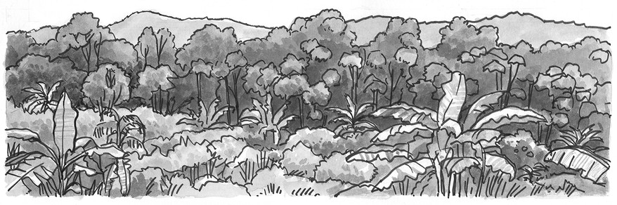 Forest with banana trees