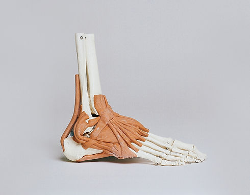 Ankle%20and%20Ligaments_edited.jpg