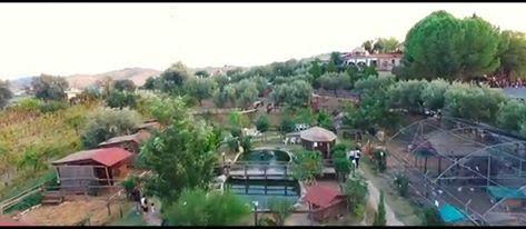zoo domestico drone