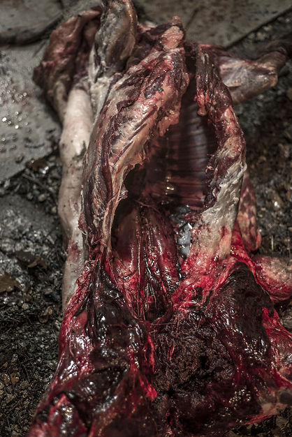 carcasses #5.jpg