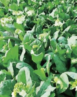 蔬菜產業專業技術班.png