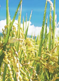 稻米產業專業技術班.png