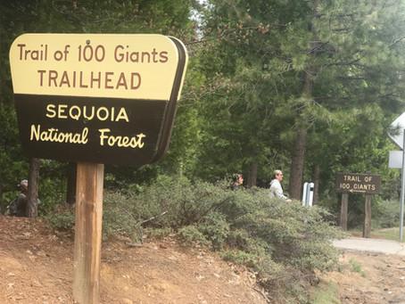 Walk Among the Giants - Trail of 100 Giants now open!