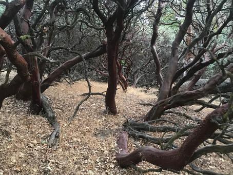 #ReGrowJO - Manzanita berry collection