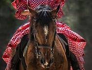 horse-horse-show-horse-head-wallpaper-th