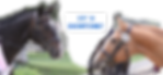 horse-2803982_960_720.png