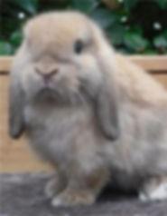 bunny too.jpg