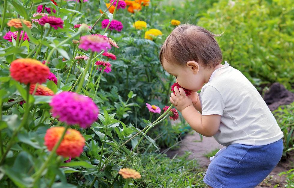 Baby Smelling Zinnias.jpg