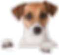 dog_PNG50375.png
