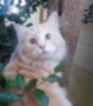 Karens moggie Gauteng Top Pet_edited.jpg