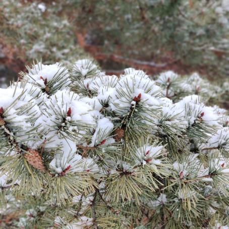 A walk in the snow: Mindfulness is everywhere!