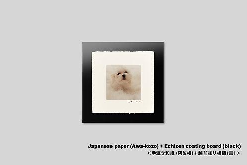 手漉き和紙,写真,犬,仔犬,ペット,マルチーズ,動物,インテリアフォト,額装,正方形,和室,かわいい,アートフレーム,壁掛け,壁飾り,装飾,オリジナルプリント,フォトフレーム,プレゼント