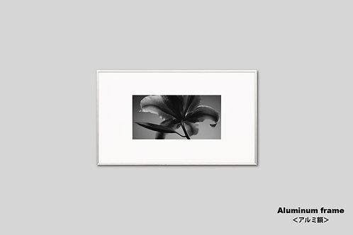 花の写真,インテリア,フラワー,インテリアフォト,新築祝い,アート,モノクロ,額入り,額装,オリジナルプリント,アートフレーム,フォトフレーム,おしゃれ,モダン,壁掛け,壁飾り,装飾,ユリ