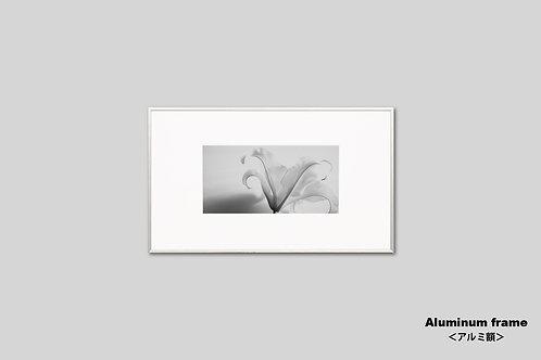 花の写真,ユリ,モノクロ,オリジナルプリント,インテリア,フラワー,インテリアフォト,アート,額入り,額装,アートフレーム,フォトフレーム,おしゃれ,モダン,壁掛け,壁飾り,装飾,新築祝い,プレゼント
