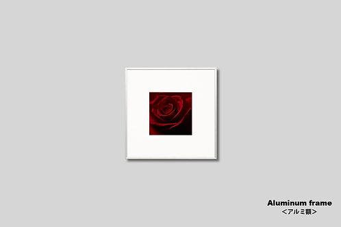 バラ,インテリア,写真,花,フラワー,プレゼント,赤い花,インテリアフォト,アート,正方形,額入り,額装,オリジナルプリント,アートフレーム,フォトフレーム,おしゃれ,モダン,壁掛け,壁飾り,装飾