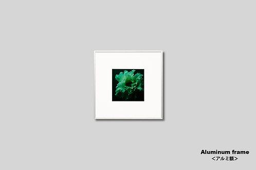 インテリア,写真,花,トルコキキョウ,フラワー,正方形,インテリアフォト,アート,額入り,額装,オリジナルプリント,アートフレーム,フォトフレーム,おしゃれ,モダン,壁掛け,壁飾り,装飾
