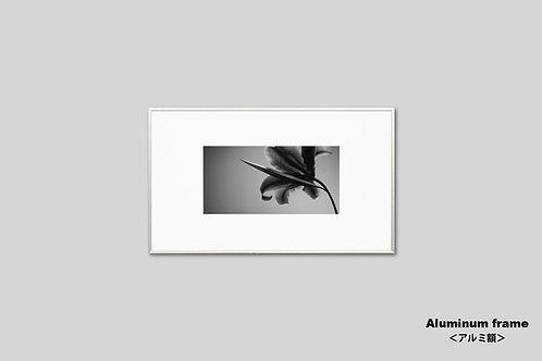 インテリア,写真,花,ユリ,フラワー,インテリアフォト,アート,モノクロ,額入り,額装,オリジナルプリント,アートフレーム,新築祝い,おしゃれ,モダン,壁掛け,壁飾り,装飾