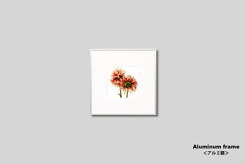 インテリア,写真,花,フラワー,ダリア,正方形,インテリアフォト,アート,額入り,額装,オリジナルプリント,アートフレーム,フォトフレーム,おしゃれ,モダン,壁掛け,壁飾り,装飾