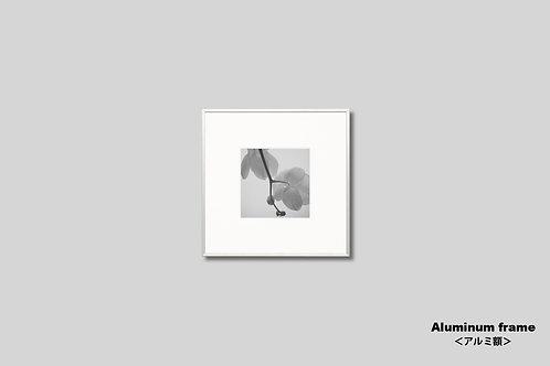 花の写真,ラン,モノクロ,オリジナルプリント,インテリアフォト,新築祝い,プレゼント,額入り,正方形,壁掛け,額装,アートポスター,ウォールアート,おしゃれ,モダン,壁飾り,装飾