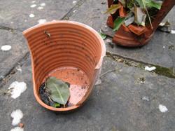 Broken pots9