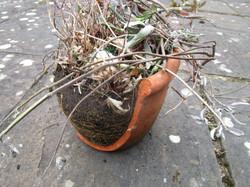 Broken pots7