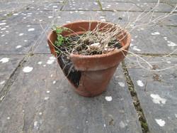 Broken pots4