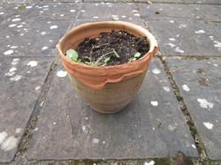 Broken pots3