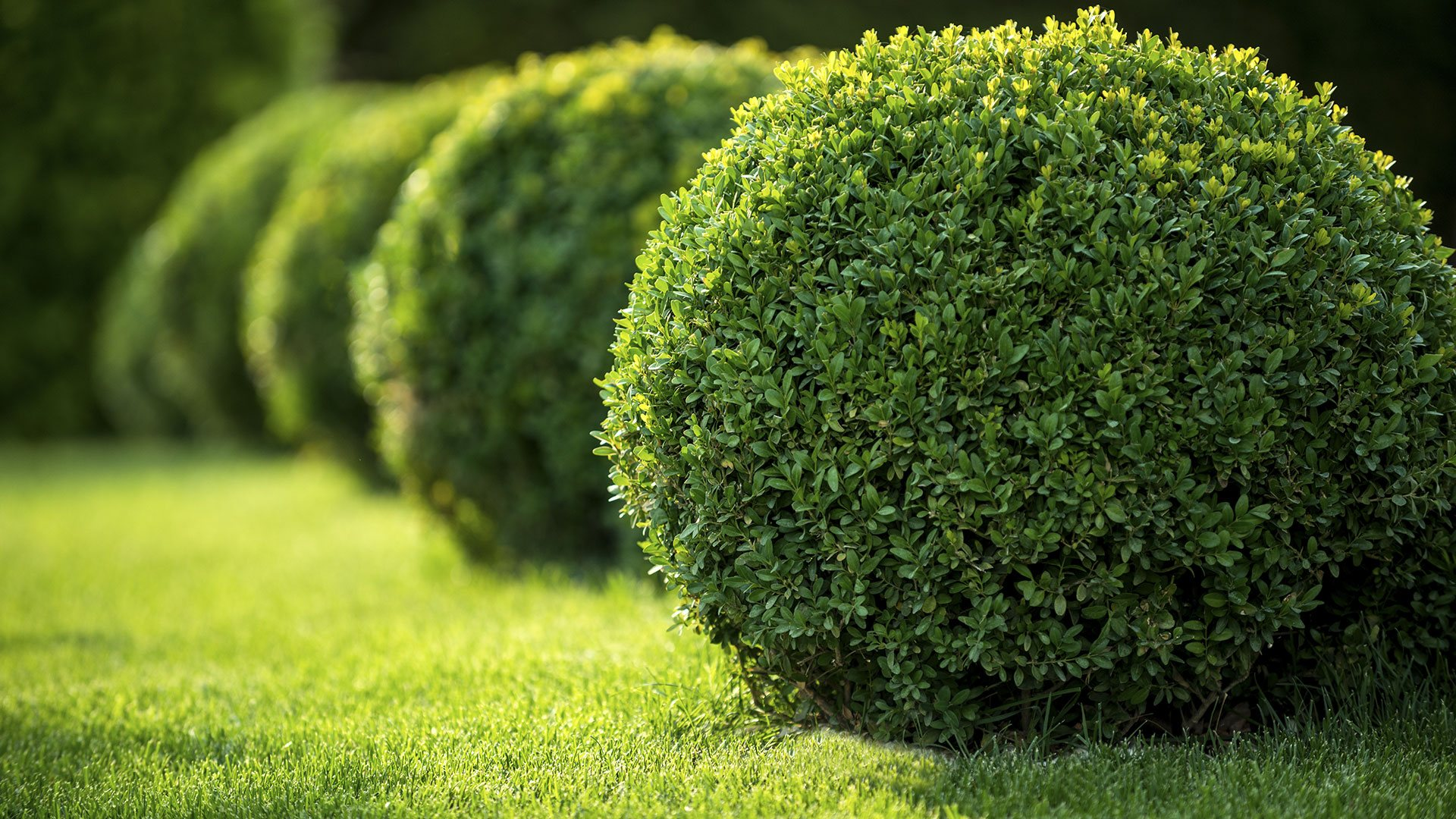 Green-Spring-Clean-Up-Landscaping
