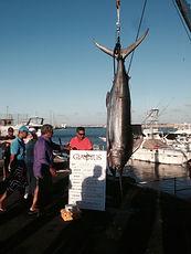 Marocco - Mohammedia blue marlin 525 libbre