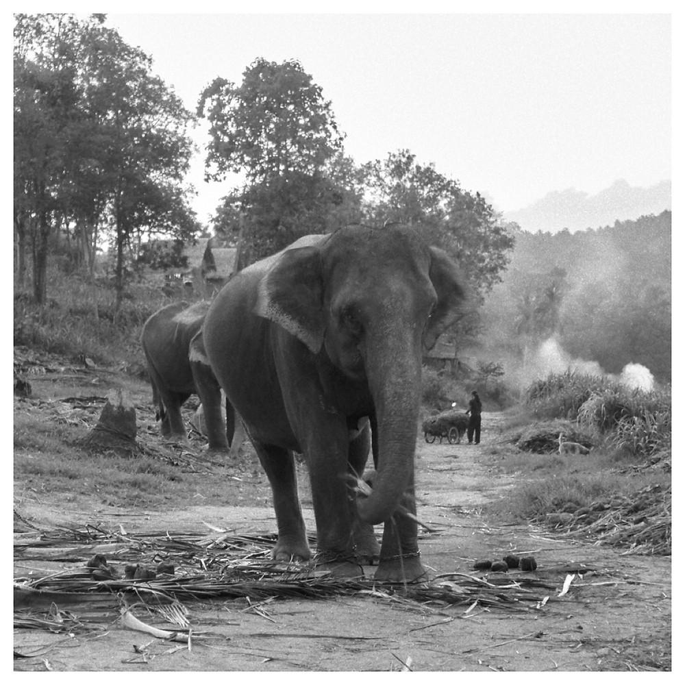 Village of the elephant
