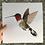 Thumbnail: Hummingbird Print