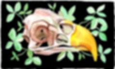 EagleSkull.jpg