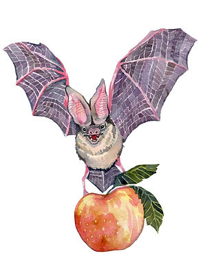 applebat_edited.jpg