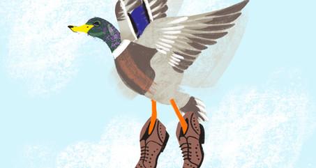 A Mallard Wearing Shoes - Digital Illustration