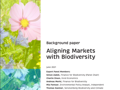 Mistra releases report on how biodiversity and the financial system are linked