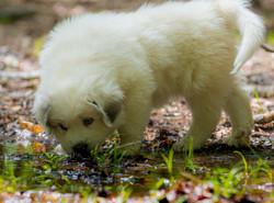 Puppy 14-3653