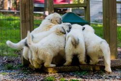 Puppy 23-3397