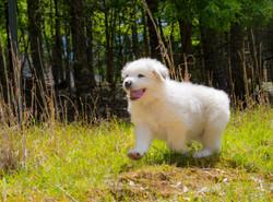 Puppy 13-3644