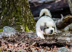 Puppy 7-3249