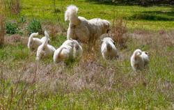 Puppy 7-3608