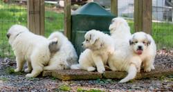 Puppy 24-3404