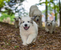 Puppy 33-3790