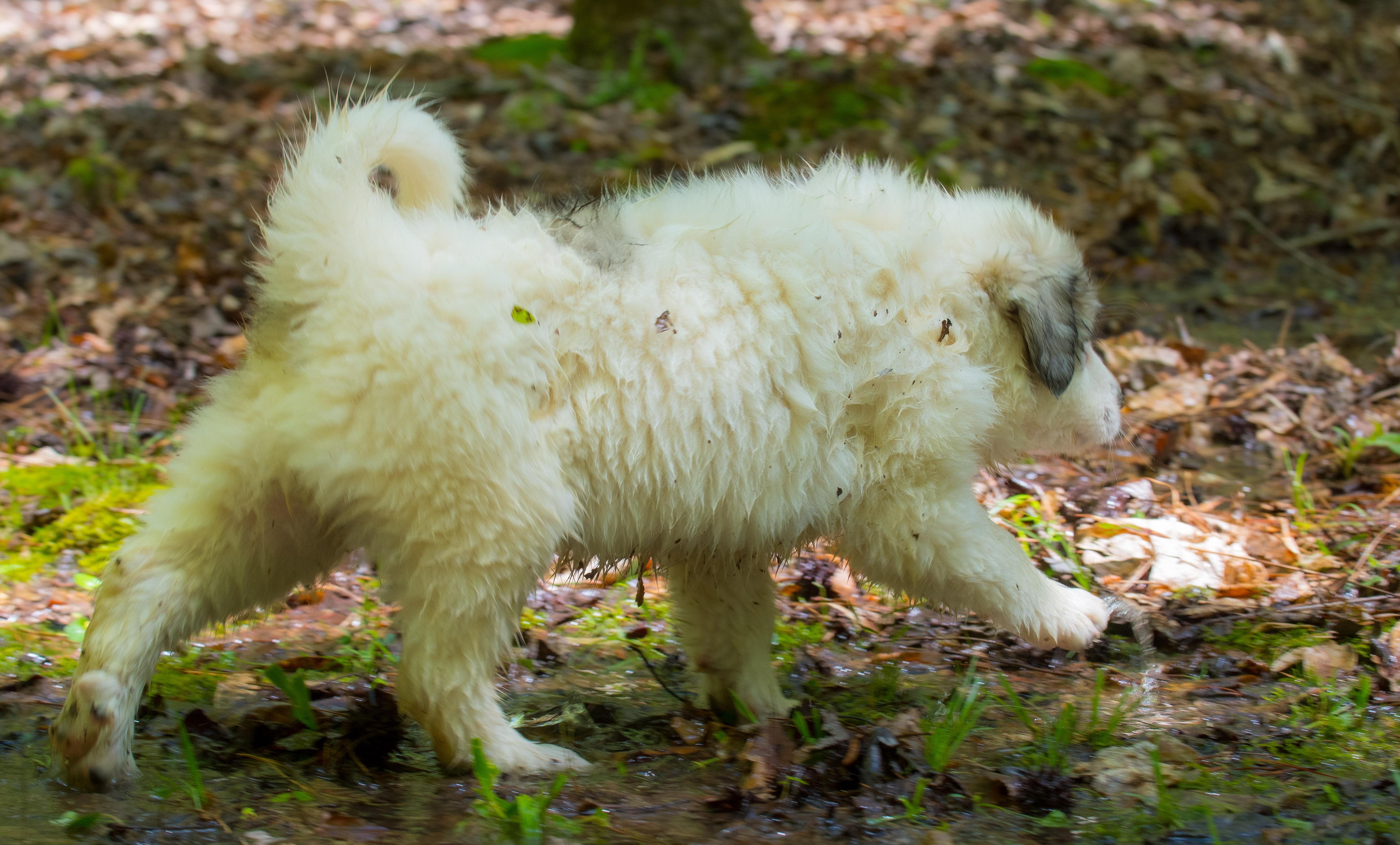 Puppy 18-3685