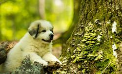 Puppy 4-3557