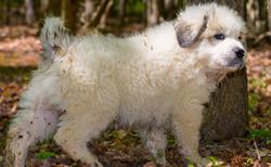 Puppy 24-3719