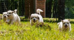 Puppy 10-3639