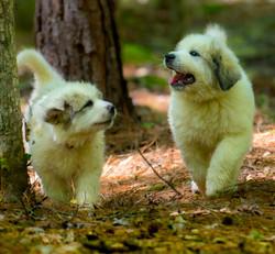Puppy 16-3673