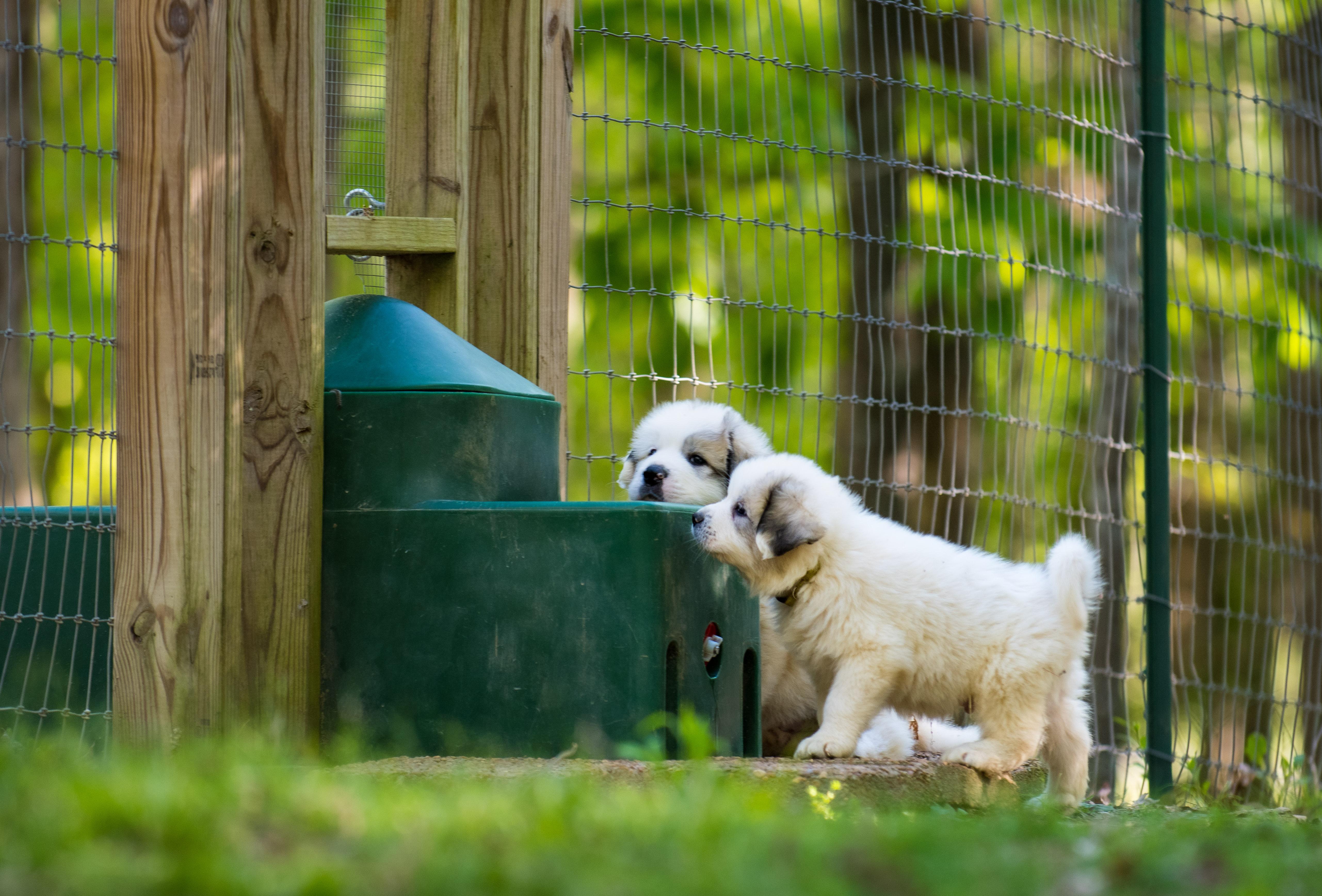Puppy 21-3381