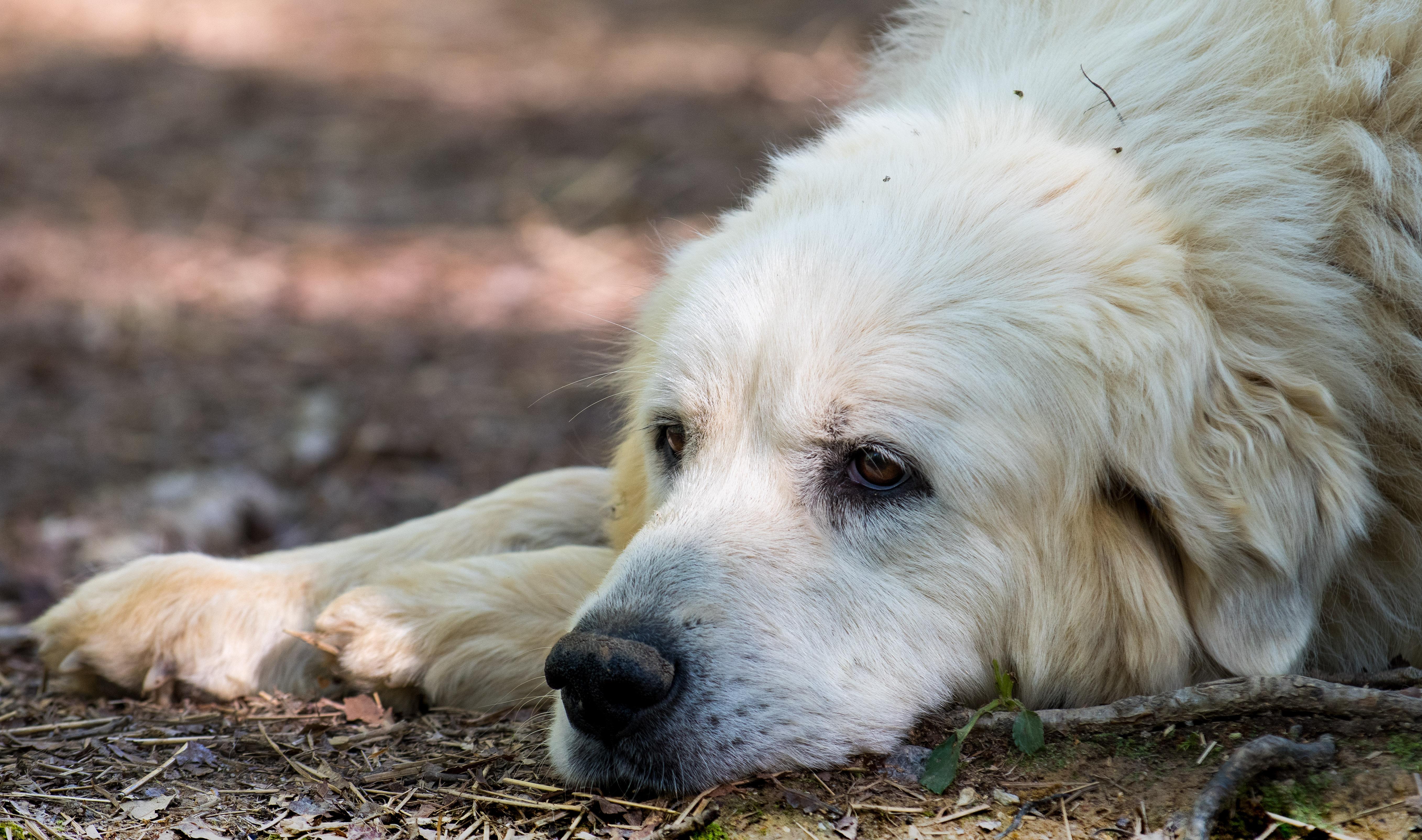 Puppy 10-3289