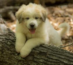 Puppy 5-3573